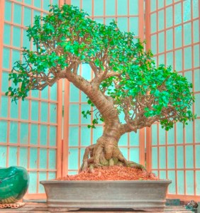 Canadian Fabric Suppliers - Bonsai Tree Care for Beginners—Everything You Need.